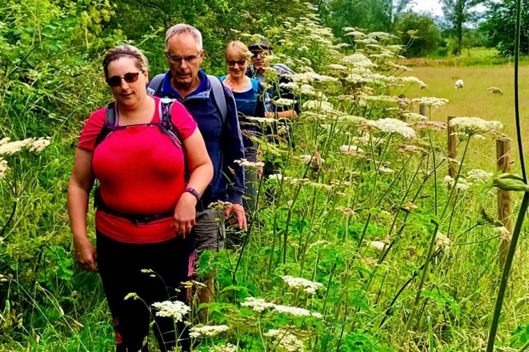 Stoke-by-Nayland, Cow Parsley